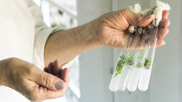 Массачусетские ученые смогли наделить растения способностью светиться