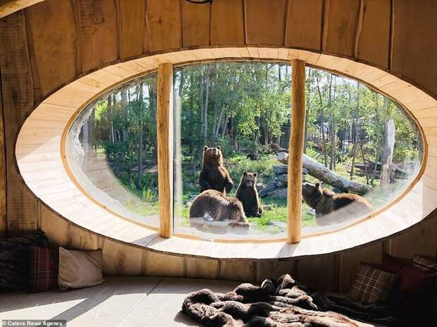 Зоопарк в Бельгии открыл номера с видом на животных