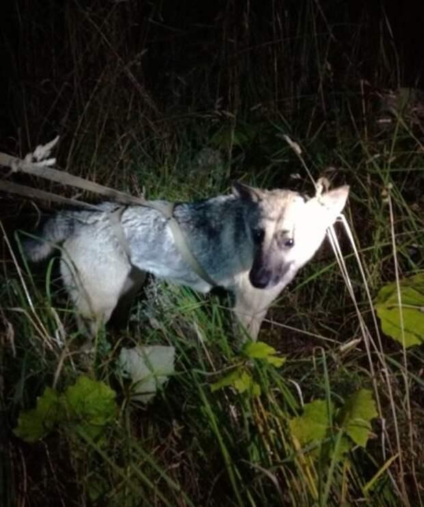 Полсотни метров – ползком, под землёй, в канализации… Парень-спасатель тянул на себе пса из последних сил!