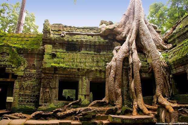 NewPix.ru - Камбоджийский храм и гигантские деревья