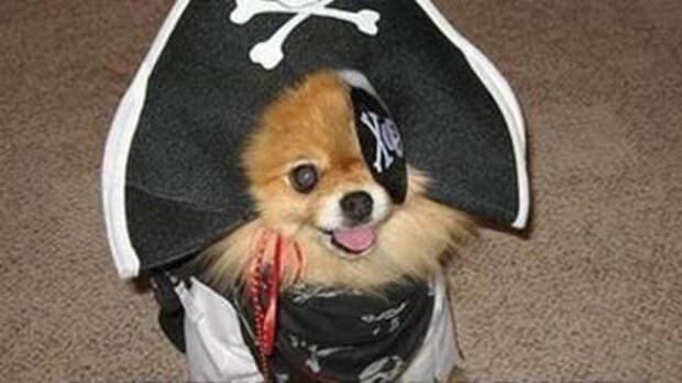 Как Голливуд может монетизировать пиратство