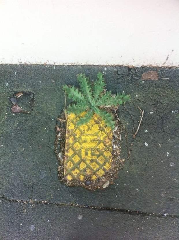 Плитка - ананас интересно, не еда, несъедобное, поразительно, странные сближенья, съедобное, удивительно, удивительное рядом