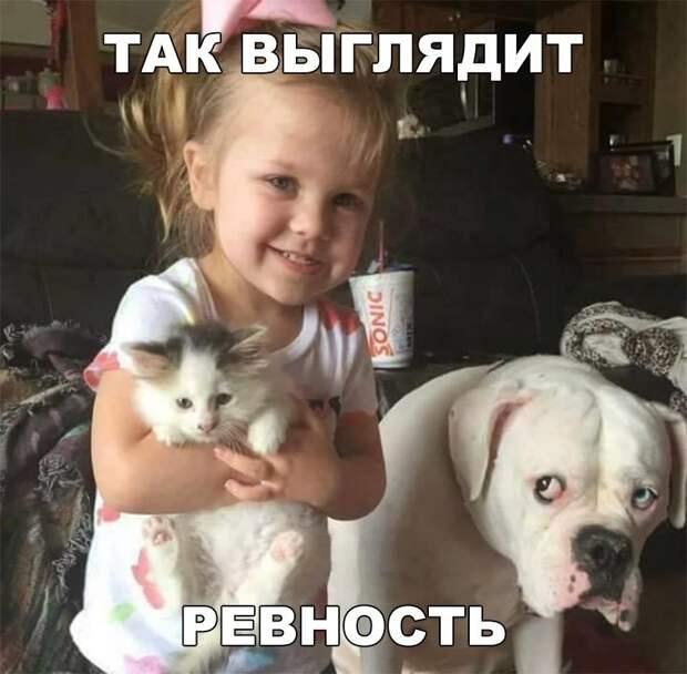 Подборка забавных картинок и веселых фото с надписями из сети