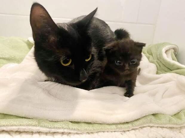 Кошка приняла котёнка-сироту и растит как родного, а обнимает даже чаще