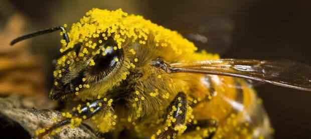 Пчелы превосходят своим интеллектом суперкомпьютеры