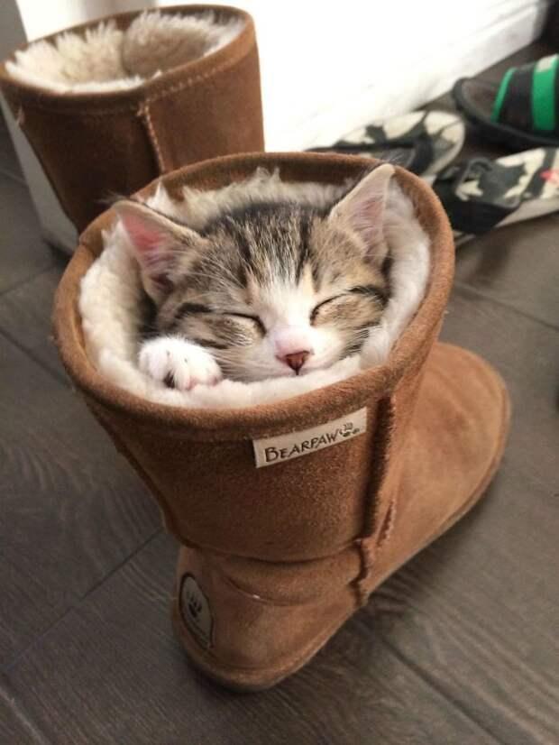 Уже убедились, что коты обожают самые неожиданные места? животные, забавно, котопост, коты, кошки, неожиданно, питомцы, юмор