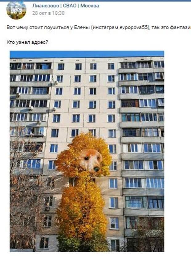 Прохожая в Лианозове превратила дерево в собаку