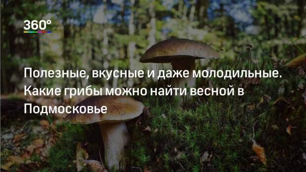 Полезные, вкусные и даже молодильные. Какие грибы можно найти весной в Подмосковье