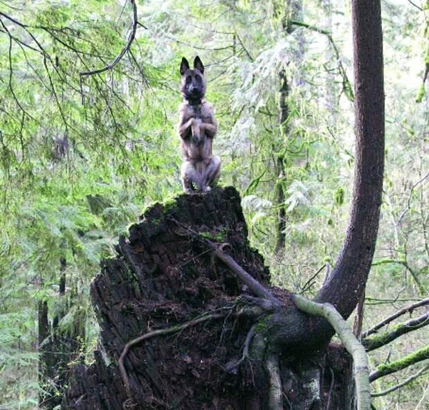 Доказательство того, что собаки на самом деле — четвероногие комики!