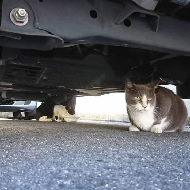 Под прикрытием кот, коты, опасный кот, прикол, суровый