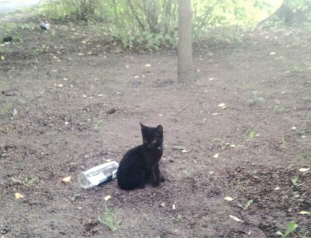Сначала пропала кошка, затем один котёнок...Пожалуйста, помогите!