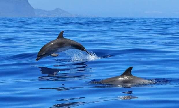 Первая в России «скорая помощь» для дельфинов появится в Крыму