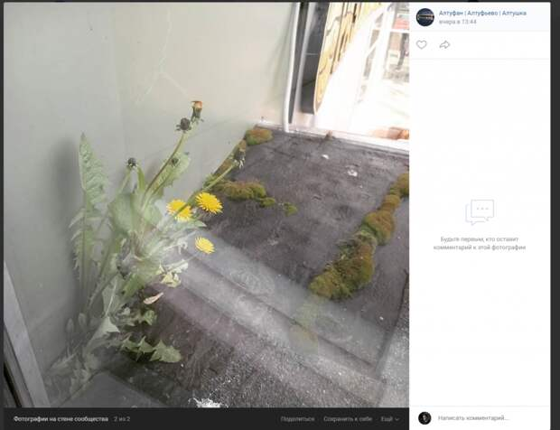 Фото дня: одуванчики в Алтуфьеве выросли из бетона