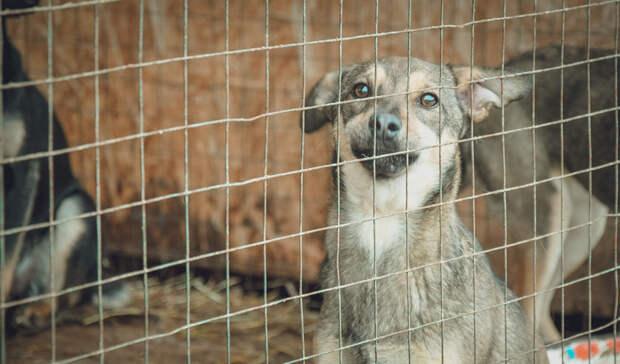 «Адский» приют для бездомных собак вАртемовском закрыт порешению суда