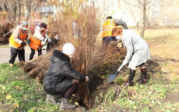 Мэр Рязани высадила кустарники в сквере имени Попова