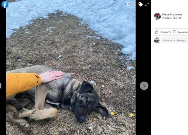 Найденной на Псковской собаке помогают отзывчивые местные жители