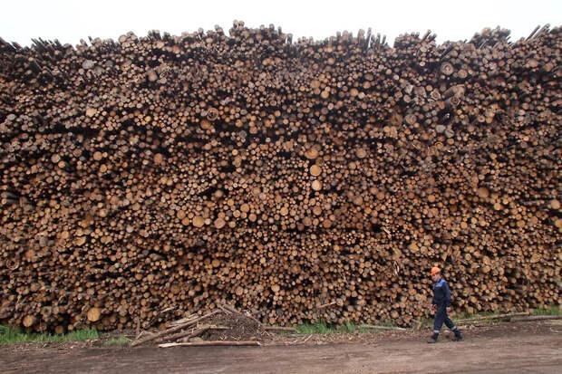 Перетягивание бревна. Правительство пока не одобрило создание лесной госкорпорации