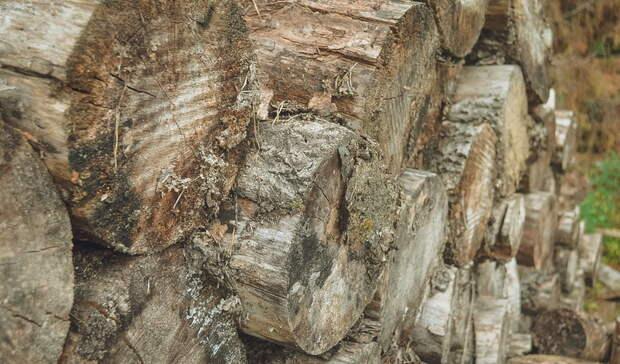 Житель Тюльганского района ответит за незаконное уничтожение деревьев