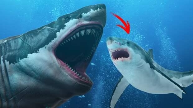 Доисторический хищник перекусил пятиметровую акулу