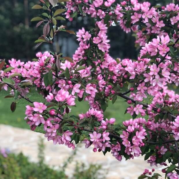 15 дел на садовом участке, которые необходимо сделать ранней весной. Планирую новый сезон.