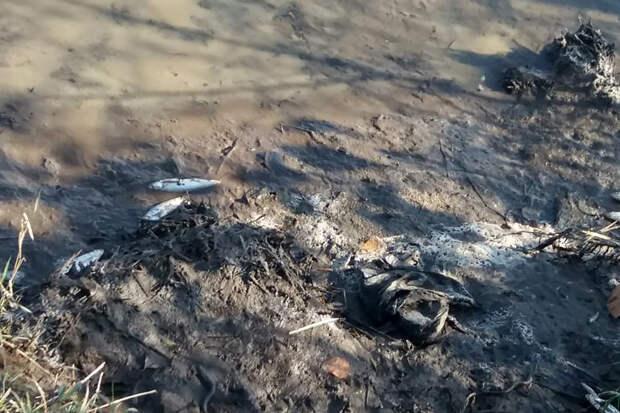 В Приморье расследуют мор рыбы в реке Артёмовка