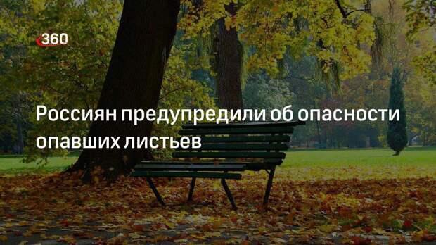 Врач иммунолог аллерголог Владимир Болибок предупредил о появлении плесени в опавших листьях