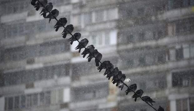 Обильный снегопад начнется в Московском регионе после 18:00
