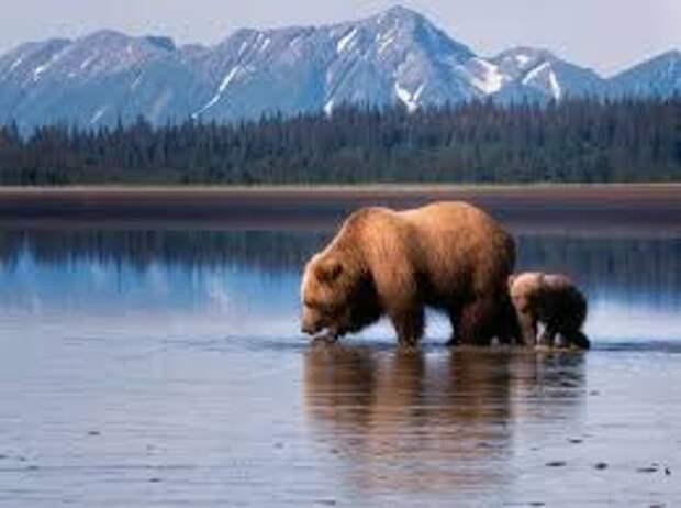 На Аляске медведь напал на женщину в туалете — он «укусил» ее за попу из выгребной ямы