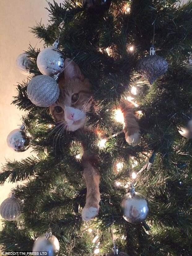 Эти коты подарят вам добрую порцию новогоднего настроения