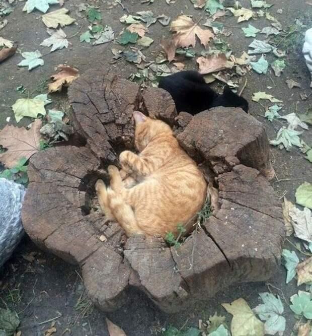 Для сна нет преград: 35 фото котов, которые это доказали