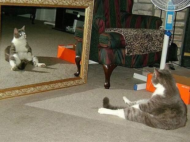 Понимают ли животные, что в зеркале их отражение?