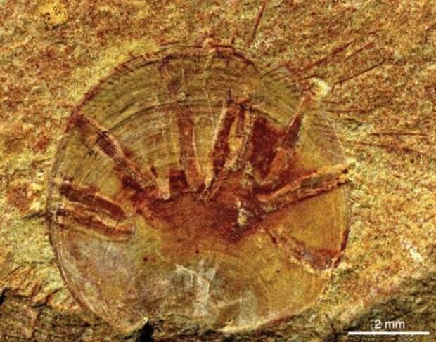 Учёные рассказали, каким был первый паразит в истории