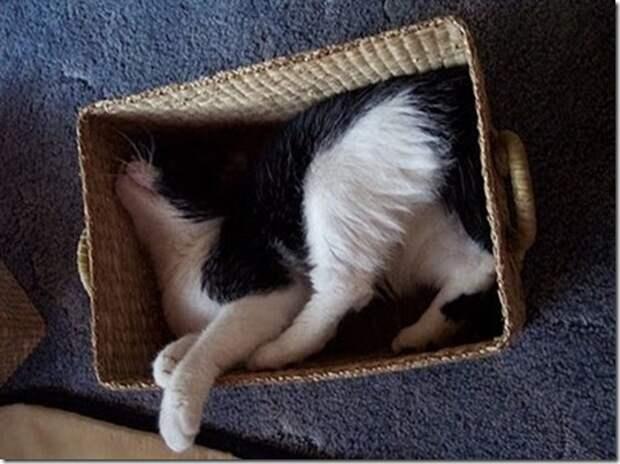 Чуть-чуть из жизни кошачьей