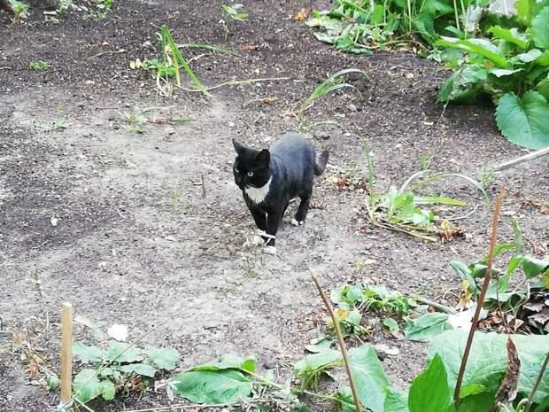 Фото дня: пугливая «пантера» из Отрадного