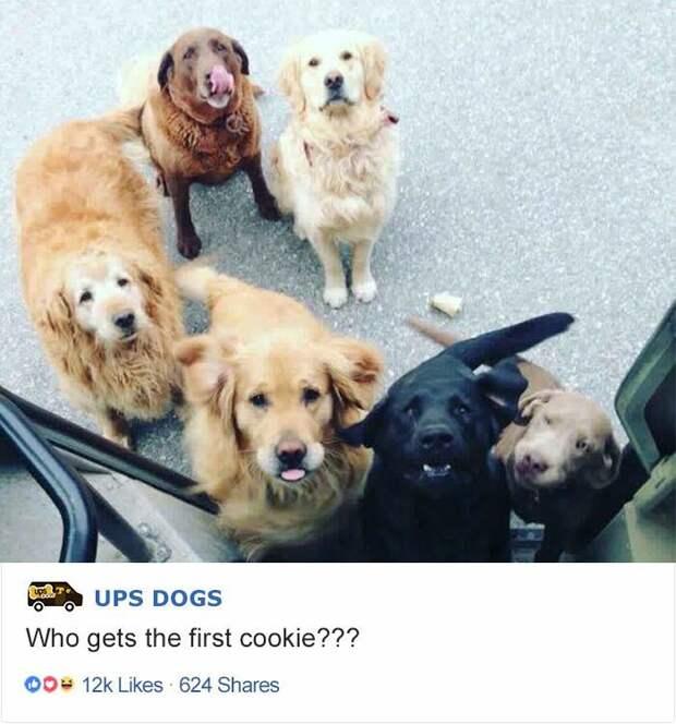 Кому первую печеньку? интересное, почтальоны, фотографии