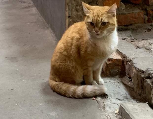 Жительница Щукина ищет хозяев для брошенной кошки