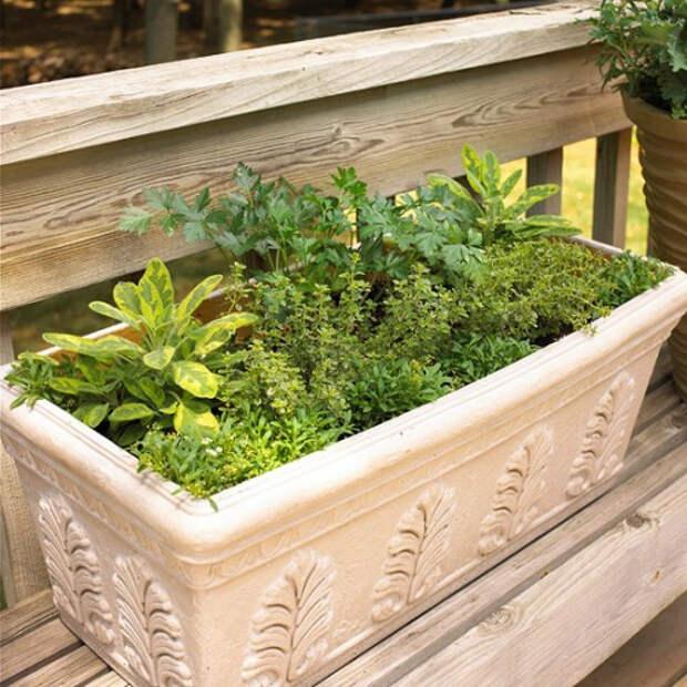 herb-garden-inspirations6-500x500 (500x500, 296Kb)