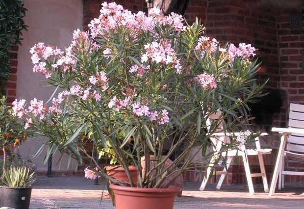 6 растений, которые не стоит держать дома