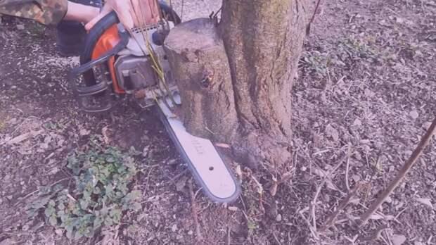 Действенный способ избавления от поросли деревьев и кустарников