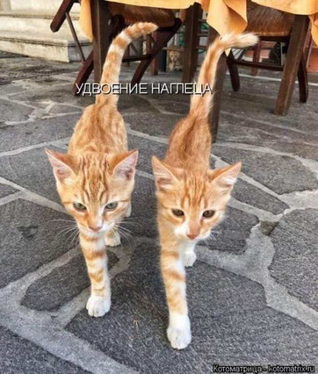 Лучшая котоматрица недели (23 фото)