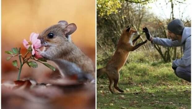 Чудо природы: удивительные снимки диких животных в лесах Австрии