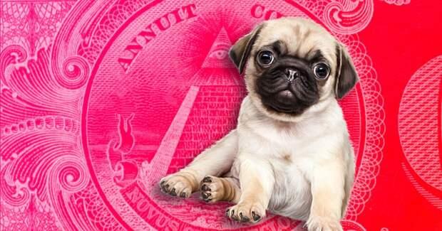 3 странных факта о том, зачем масоны создали Орден мопса