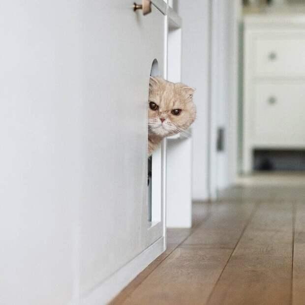 Кстати, о друзьях Нона. Он живёт с двумя соседями, которые немногим дружелюбнее животные, кот, милота, мимика, морда, ненависть