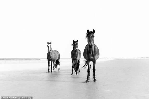10 волшебных фотографий диких лошадей сострова Камберленд