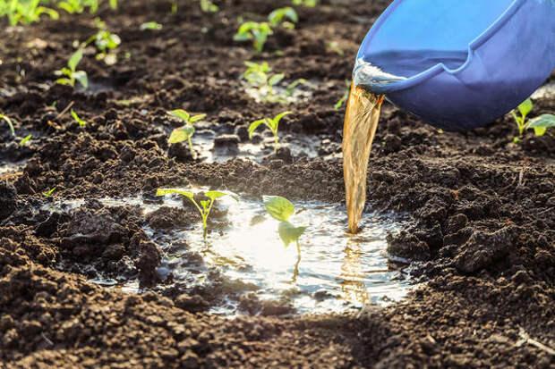Зеленое удобрение используют для подкормки в первой половине лета