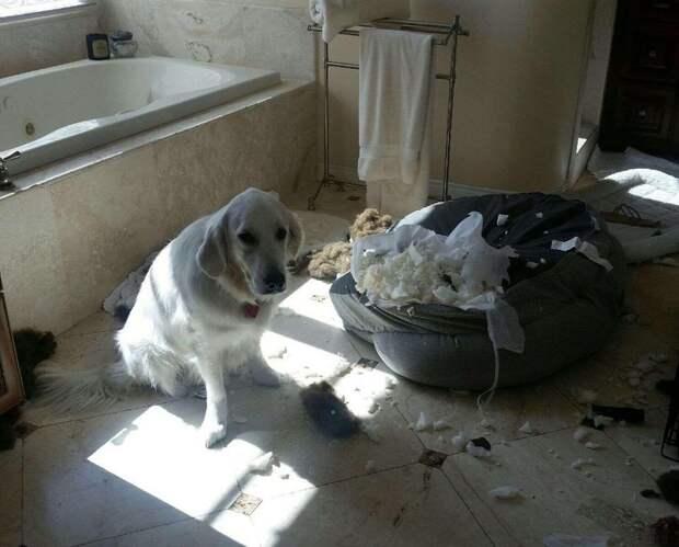 20 раз, когда владельцы поймали своих домашних животных с поличным