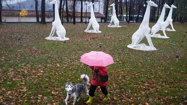 В Москве в среду ожидается до +12°С и небольшой дождь