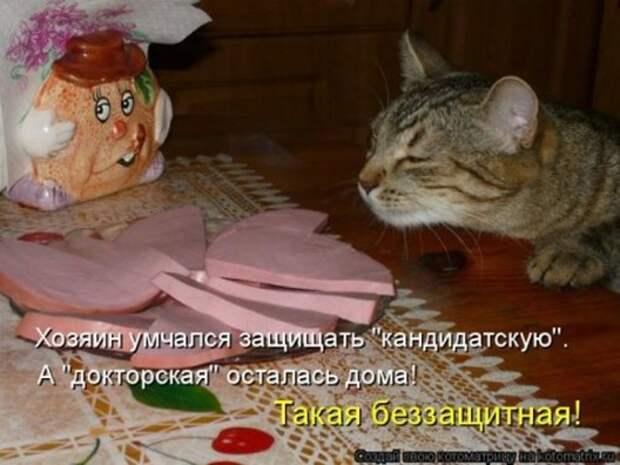 1305242886_kotomatritsa-4