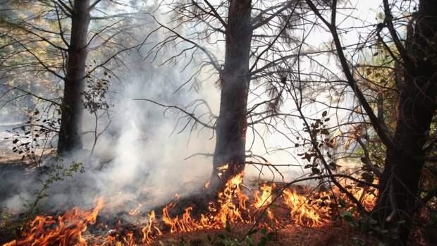 Пожароопасная обстановка может ухудшиться в ряде регионов России