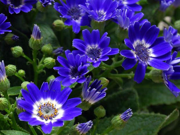 Красивые и яркие цветы к 8 марта
